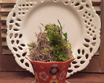 Vintage Pot with Drain Tray