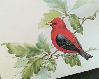 Vintage notecards, vintage stationery, bird cards, bird stationery, birds