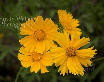 Yellow flower photography print, flower photograph, nature photography print,  yellow flower decor, nursery decor, fine art, yellow decor