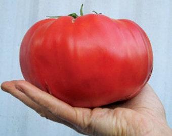 VTHB) BRANDYWINE-RED Tomato~Seeds!!!~~~~~~Sweetest Tomato Around!