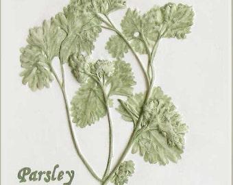 """4 1/4"""" x 4 1/4"""" Parsley Herb Tile"""