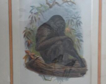 the siamang gibbon monkey print