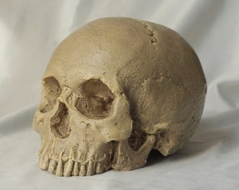 HUMAN SKULL REPLICA (natural bone, lightly weathered finish) full size realistic replica made from plaster of Paris, very lightly painted