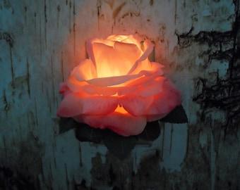 LED Auto-Sensor Wall Flower Night Light ( Pink)