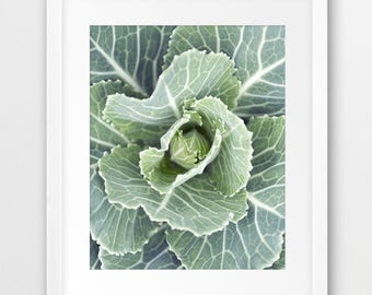 Cabbage Plant Print, Botanical Art, Kitchen Decor, Vegetables Print, Cabbage Photography, Modern Wall Art, Home Office Decor, Printable Art