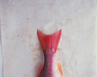 Fine Art Giclee print. Food Photograph. Still life image, detail of fish tail on parchment paper. Textured paper or wood background.