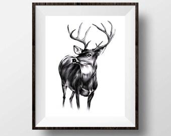 "Stag - Deer Pen Illustration Giclée Fine Art, Animal Art Print - 8x10"""