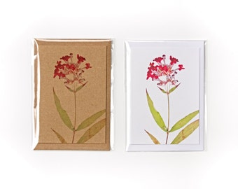 Pentas Dried Flowers Blank Note Card