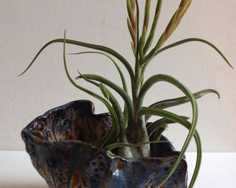 Abstract Urchin Air Plant Holder