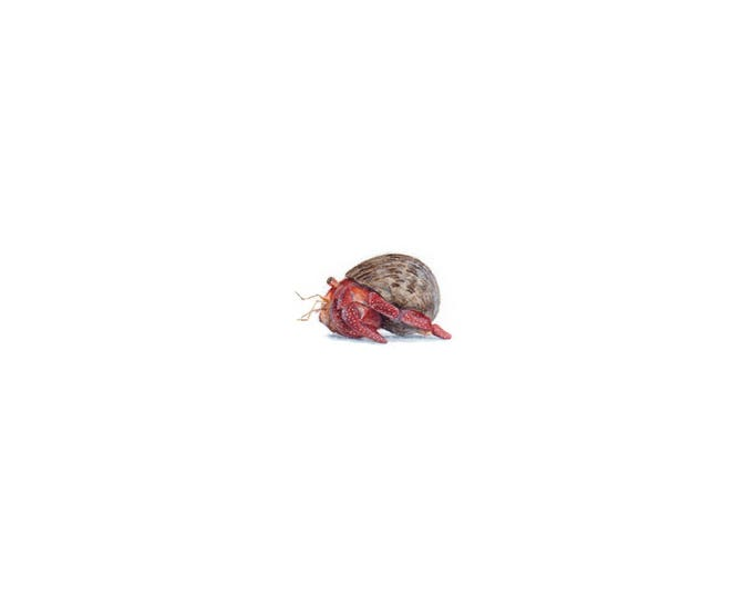 Original Miniature painting of Hermit Crab tiny painting, Hermit Crab tiny art 5 x 5