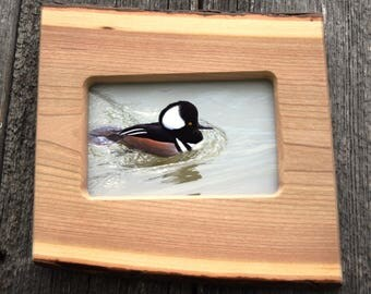 Wildlife photography / merganser duck / 4 x 6 picture frame / cherry wood, live edge / hunting cabin decor / wall decor / natural wood.