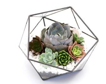 Geometric terrarium, Succulent glass terrarium, Modern terrarium, Miniature garden, DIY terrarium kit, , Succulent garden, Fairy garden