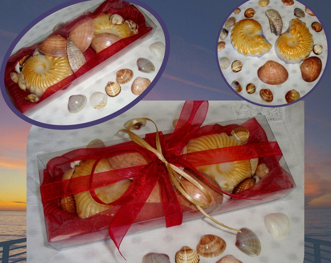 Natural Sea Shells & Decorative Shell Soap in a Gift Set, Beach Glycerin Scented Soaps, Aegean Sea Natural Shells, Unique Fathers Day Gift