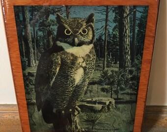 Owl Print Wood Plaque Wall Decor