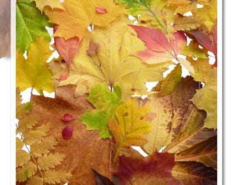 Decoupage Soft Paper | foliage autumn fall leaves leave indian summer warm earthy colors leafing season thanksgiving