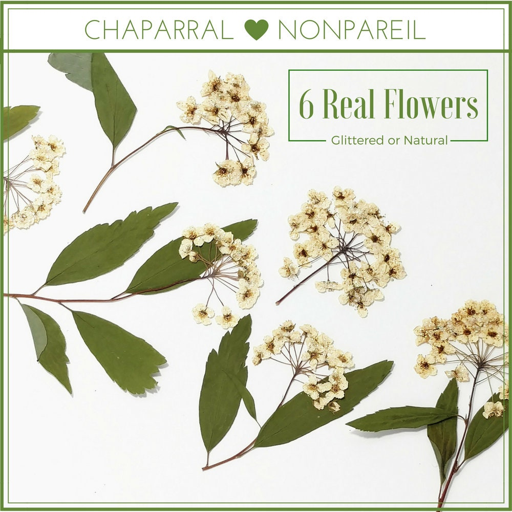 How to scrapbook dried flowers - Sold By Chaparralnonpareil