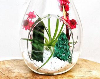 DIY Crystal Air Plant Terrarium Kit ~ Includes 7.5 Clear Glass Hanging Terrarium, accessories, ...