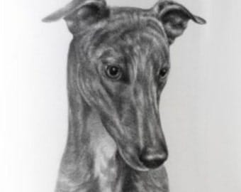 Printable Greyhound Dog - Digital Image - Pet Animal Download - Graphic Original Portrait - Grayhound Printable - The Dog Watcher