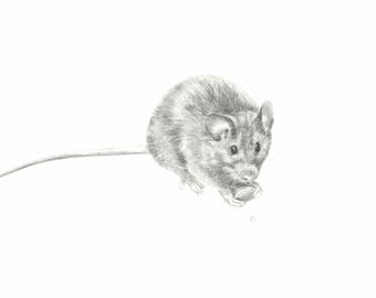 Little mouse - Fine art print of a pencil drawing