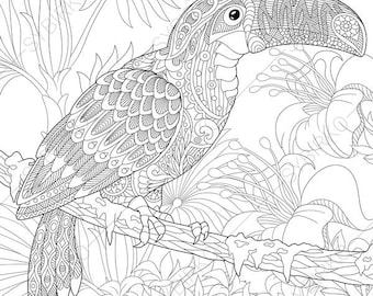 Adult Coloring Pages Toucan Zentangle Doodle For Adults Digital Illustration