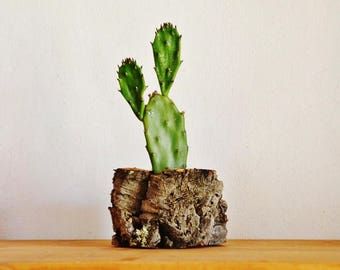 Natural Cork Planter, Handmade Organic and Eco-friendly Cactus and Succulent Planter. Large Flat Pot.