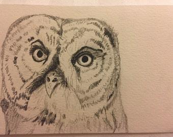 Original Pencil Drawing - Owl