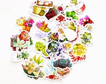 Succulent Stickers/ Cactus Stickers/filofax stickers/planner stickers/Watercolor stickers/erin condren