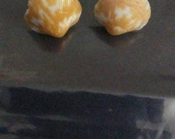 Orange Shell Earrings
