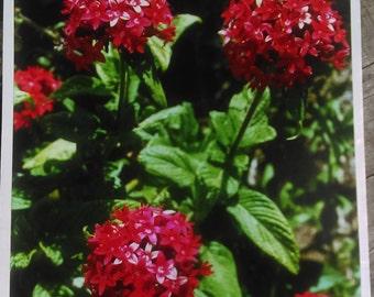 8 X 10 Floral Photograph