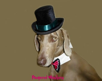 "The Aristocrat Top Hat and Bow Tie for Large sized dogs with 23-26"" collar size"