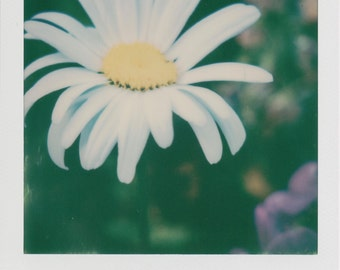 Daisy Instant Printed Photo - Decorate with a vintage feel - Free Domestic Shipping
