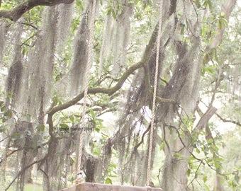 Oak Tree Photography, Oak Photography Art Print, Tree Swing Art, Tree Wall Art, Oak Tree Decor, Louisiana Art, Tree Swing, Oak Tree Print