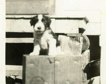 "Vintage Photo ""The World's Cutest Puppy"" Snapshot Antique Photo Old Black & White Photograph Found Paper Ephemera Vernacular - 48"