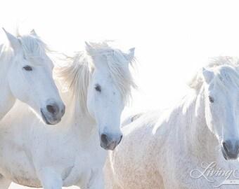 Three Close Up on the Beach - Fine Art Horse Photograph - Horse - Camargue - Fine Art Print
