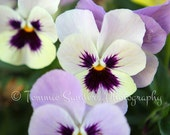 Pansy Flower Photography Lilac and Yellow Baby Girl Nursery Decor Home or Office Wall Art