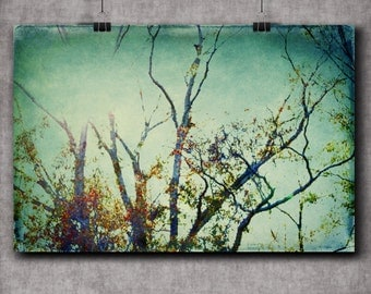 Fading - multiple sizes fine art photo - fall woodland trees grey leaves red yellow blue green - free U.S. shipping