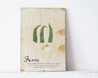 Pressed Herbs- Fern in Frame (8)