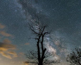 Tree Lights - Milky Way Photography - Shenandoah National Park - Astrophotography, Stars - Virginia Print - Landscape Photography