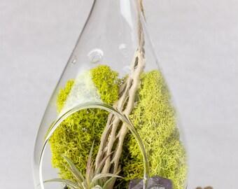 Hanging Terrarium Kit Amethyst Crystal Point + Pyrite    DIY    February Birthstone    Gifts for the Gardener    Teardrop