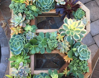 "Succulent letters any letter or number 20""x17"""