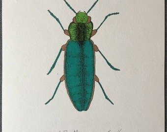 Hand Drawn Jewel Beetle | Insect drawing | Insect Art