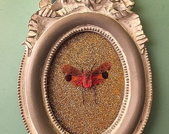 Framed Lanternfly Insect