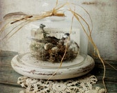 Home Sweet Home. Spring time Woodland Bird Nest Eggs. Rustic Cloche Display.  Rustic Farmhouse Decor
