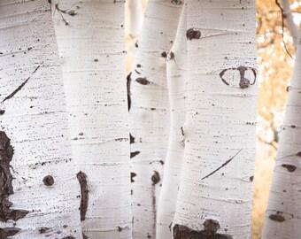 Aspen trees fall photo, Colorado aspen wall art, fall trees photo, log cabin decor, fine art photography, rustic wall art, home wall decor