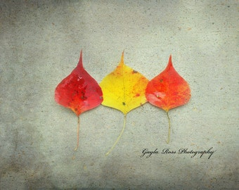 Leaf Photography,Nature Photography, Fall Photography,Autumn Photography,Plant Photography,fall leaves,Forest,Fine Art,Botanical,fall colors