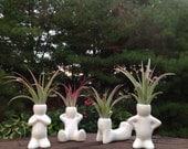 Air Plant Zen Men, Desktop Planter, Gift, Desk Assessories, Indoor Plant, Tillandsia