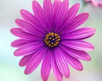 Purple Solitude