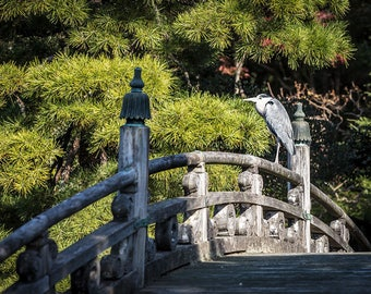 Japan Photography, Grey Heron, Kyoto Temple, Landscape Photography, Gallery Wall Art, Japanese Style, Travel Photography, Beautiful Japan