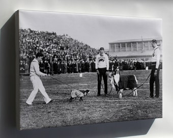 Canvas 16x24; Georgetown And Navy Mascots 1920S