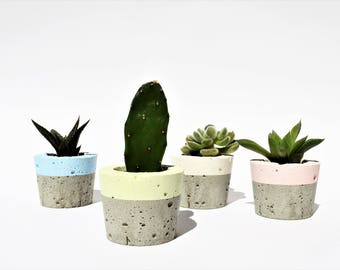 pastel Concrete Mini Planter for succulent cactus home decor modern small planter